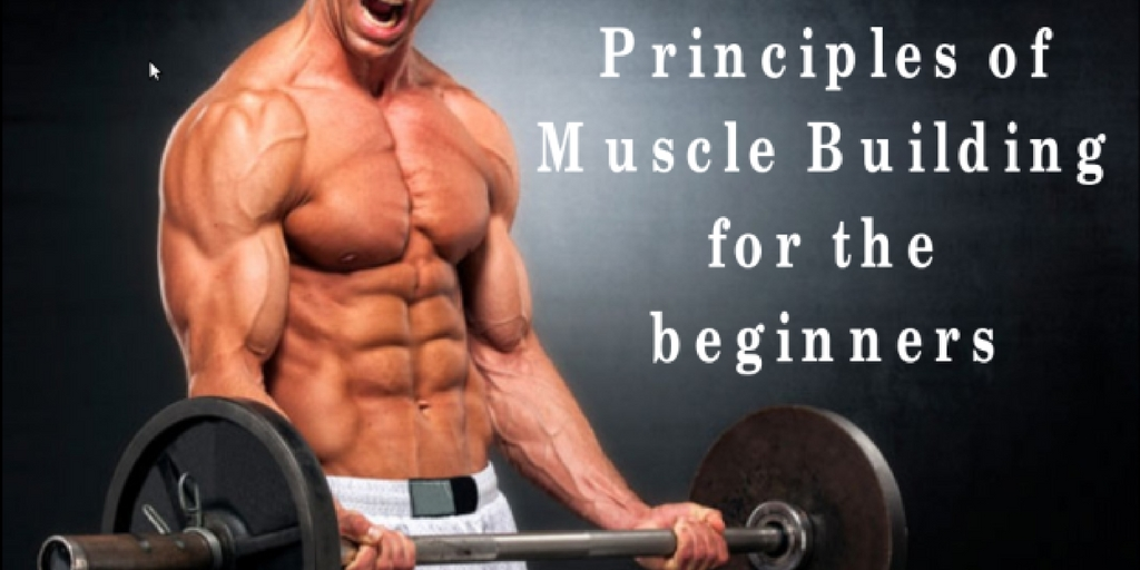 Principles of muscle building for the beginners