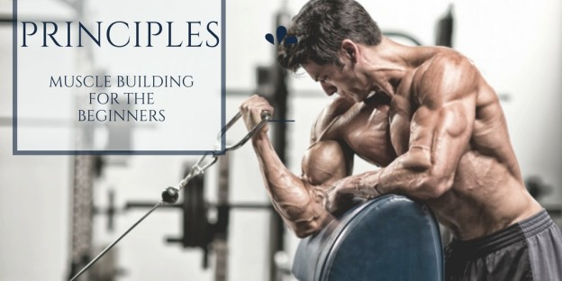 Basic Principles of Muscle Building for the Beginners