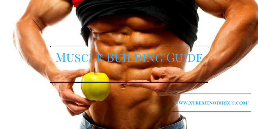 muscle-building-guide