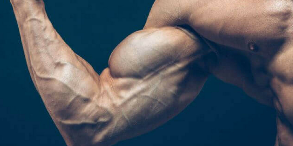 Build Muscles Fast